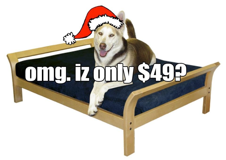 50% Off Dog Beds for DogGoneSeattle Readers