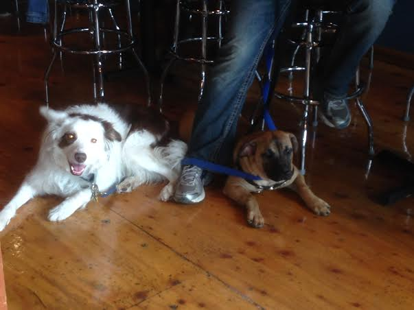 Dog Friendly Brunch at the Leary Traveler